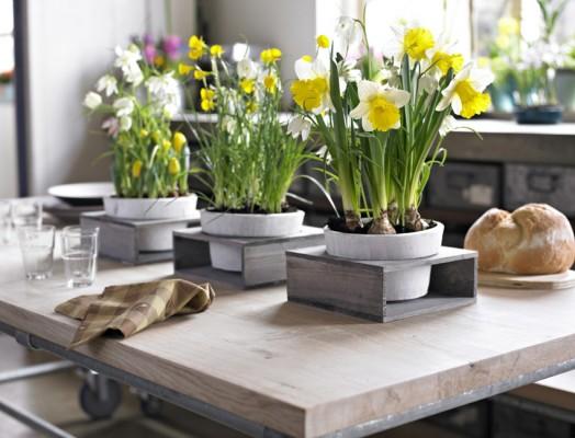 Saznajte na kom mestu u stanu biljke najbolje napreduju