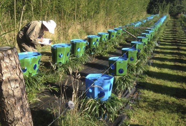 Šuma u kojoj raste gotov nameštaj!